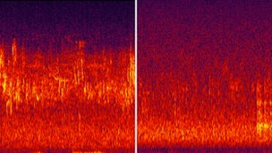 "Dr. Bernie Krause - Spectrogram ""Before/After"""