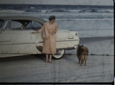 Beach - Car - Woman - Dog 2