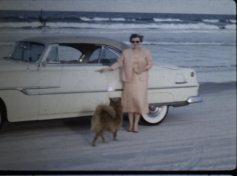 Beach - Car - Woman - Dog