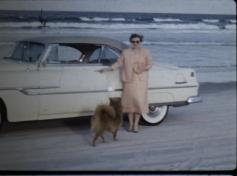 Beach - Car - Woman - Dog
