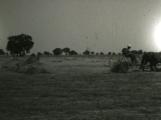 Horse - Field 2