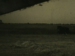 Horse - Field 4
