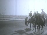 Horses - Race