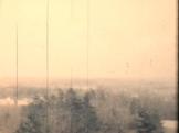 Trees - Landscape