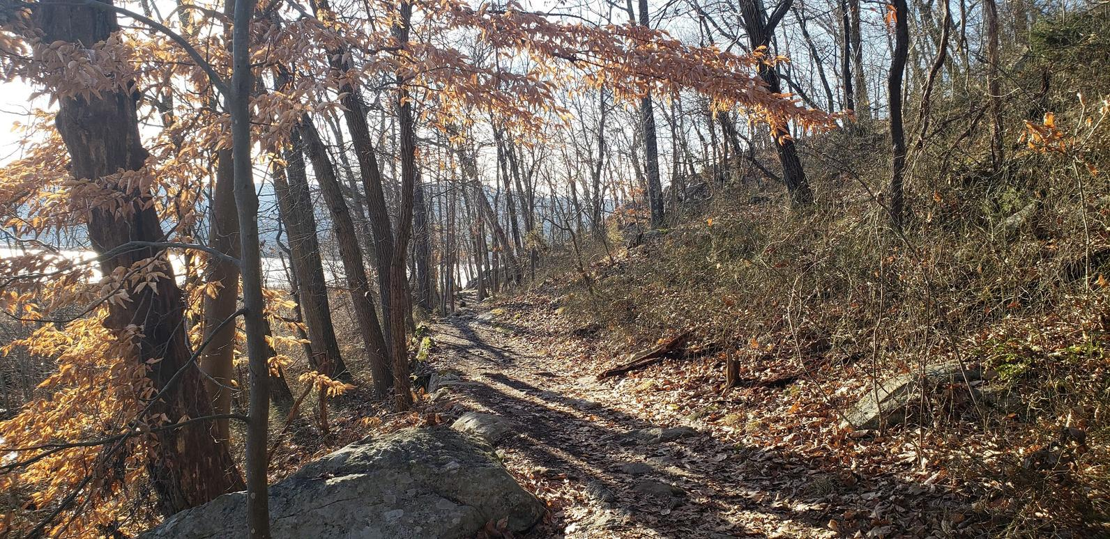 Hiking trail at Constitution Marsh Audubon Center and Sanctuary Photo Jessica Andreone.jpg